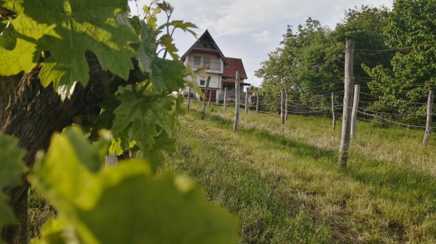 MacskaFészek vendégház, Kissomlyó, Kis-Somlyó szőlőhegy